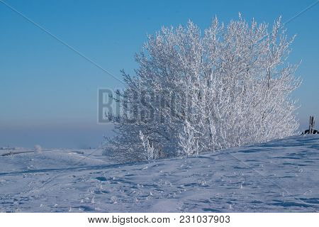 Heavily Frosted Trees Against A Robin Egg Blue Sky