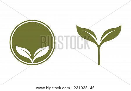 Green Organic Product Label Vector Food Packaging Illustration