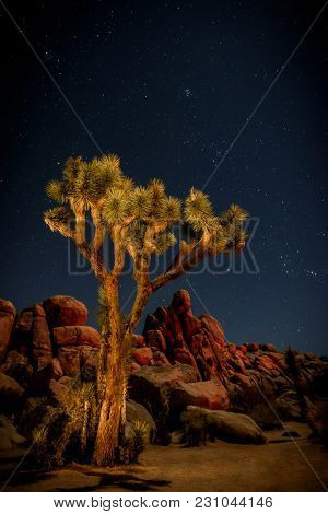A stary night sky behind a light-painted Joshua Tree in the Joshua Tree National Park in the Southwestern United States