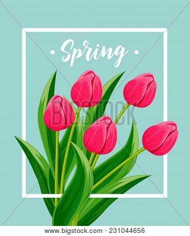 Spring Greeting Card With Blooming Tulip Flower Festive  Illustration. Floral Decorated Spring Desig