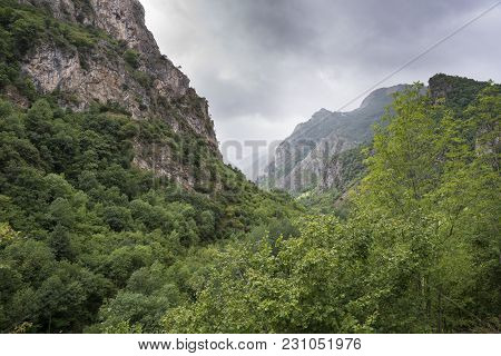 Woodlands In Somiedo Valley, Somiedo Nature Reserve. It Is Located In The Central Area Of The Cantab