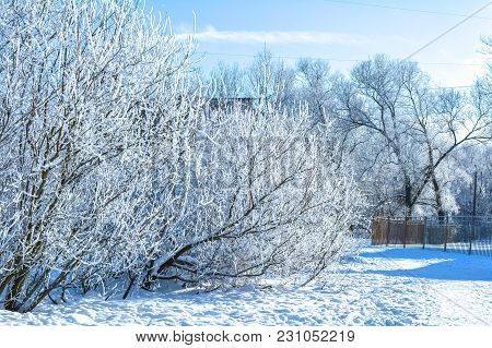 Winter Branches Of Trees In Frost Snow Flakes On Blue Winter Sky