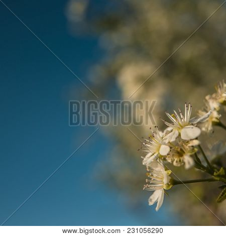 Flower Of An Apple Tree On A Blurred Background. Spring Season.