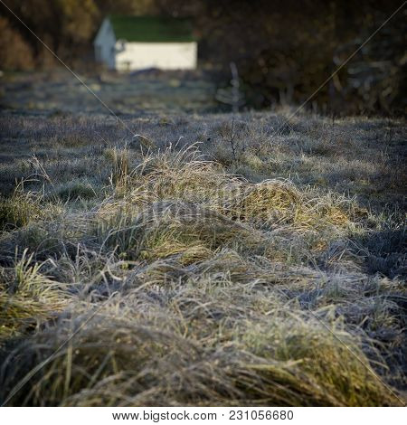 Grass Covered With Frost In The Meadow And A House In The Countryside. Autumn Season, October.