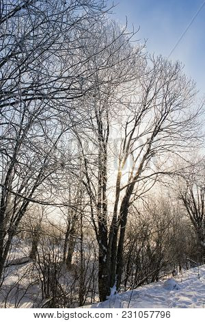 A Sunlit Tree In A Frost. Winter Nature Under Snow On A Sunny Day.