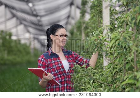 Woman In Apple Orchard