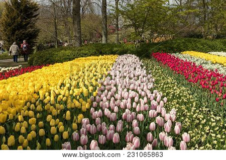 Lisse, Netherlands - April 19, 2017: Colorful Flowers In The Keukenhof Garden In Lisse, Holland, Net