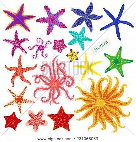 Sea Stars Set. Multicolored Starfish On A White Background. Starfishes Underwater Invertebrate Anima