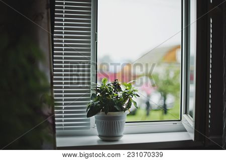 Flowers In A Pot On The Windowsill.