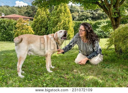 Woman Talking With Her Labrador Dog In The Garden.