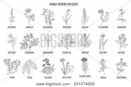 Natural Herbs For Cough Remedies. Hand Drawn Botanical Vector Illustration