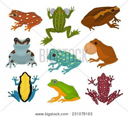 Frog Vector Froggy Character And Cartoon Amphibian Toad In Tropical Nature Illustration Set Of Fauna