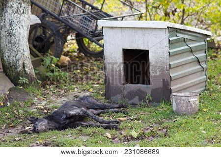 There Is A Dead Dog In The Yard Near A Doghouse