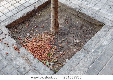 Top View Of Street Cat And Dog Food In Sidewalk Tree Base