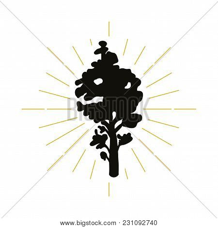 Retro Tree Silhouette Logo. Nature Sign And Vintage Logotype. Ecology Icon. Park, Resort Or Reserve
