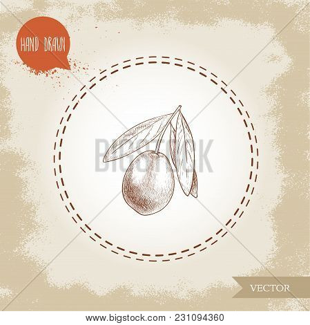 Hand Drawn Sketch Style Olive Branch. Olive Oil And Healthy Food Vector Illustration On Vintage Look