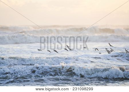 A group of birds flying over the ocean at sunrise. A beautiful golden haze is in the sky, and the waves of water crash onward. poster