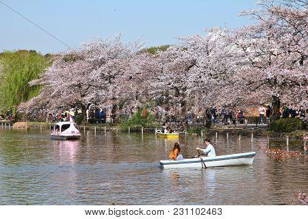Tokyo, Japan - April 12, 2012: Visitors Enjoy Cherry Blossoms (sakura) In Ueno Park, Tokyo. Ueno Par