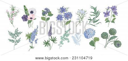 Bundle Of Detailed Drawings Of Beautiful Floristic Flowers And Decorative Herbs Isolated On White Ba
