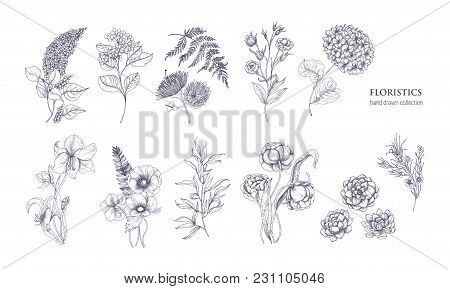 Collection Of Gorgeous Floristic Flowers And Wild Flowering Plants Hand Drawn With Black Contour Lin