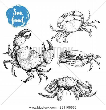 Crab Sketch Set. Hand Drawn Collection Of Seafood. Vector Illustrations Of Different Crabs.