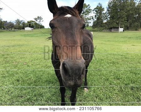 A Horse In A Farm In North Lakes, Queensland, Australia