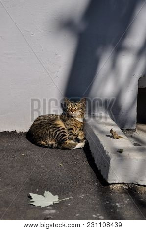 The City Cat Is Basking In The Sun On The Street Under The House. Striped Red-haired Gray Multicolor