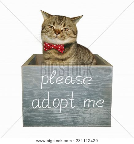 The Cute Cat Is In A Wooden Box, On Which There Is An Inscription