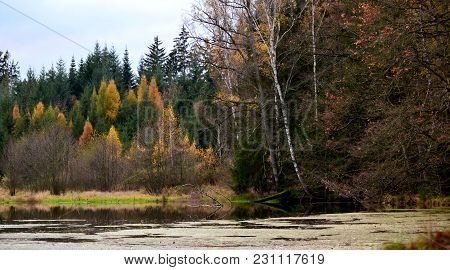 Autumn Landscape,  Forest And Birch Trees On The Shore Of The Lake