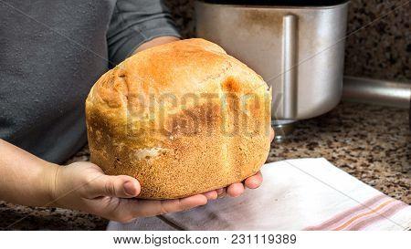 Homemade Bread In Hands,  Baked In A Breadmaker