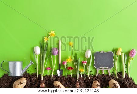 Spring Flower Bed, With Planted Potatoes, Spring Onions, And Garden Tools Laid Flat On Green Paper B