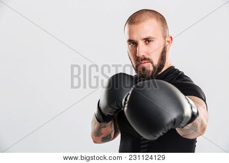 Closeup image of serious bearded man with tattoos on his arms punching in boxing gloves isolated over white background