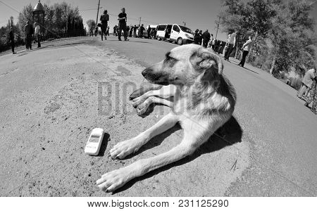 Dog and geiger counter.Checpoint of Chernobyl Exclusion Zone.,May 19, 2017.Kiev region.Ukraine