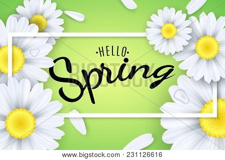 Hello Spring. Seasonal Poster. Camomiles Flowers On A Light Green Background. Text In A Frame. Falli