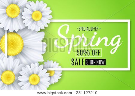 Spring Sale Banner. White Flowers Of Chamomile On A Light Green Background. Seasonal Poster. Special