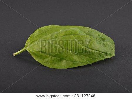 Colorful And Crisp Image Of Basil Leaf On Black