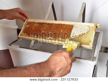 Colorful And Crisp Image Of Uncapping Of Honeycomb At Plastic Tub