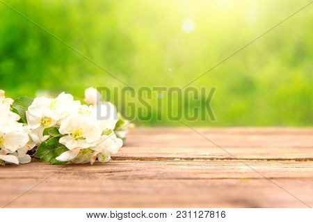 Spring Flowers Of Blossoming Apple Tree Branches On Rustic Wooden Table Over Green Garden. Sunbeam.