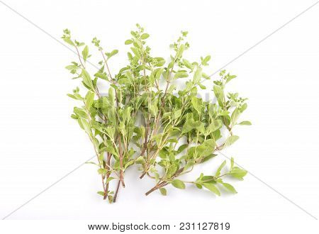 Colorful And Crisp Image Of Marjoram On White Background