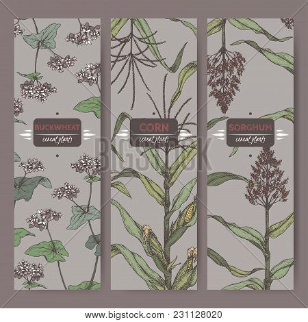 Ste Of Three Vintage Labels With Sorghum, Corn And Buckwheat Color Sketch. Cereal Plants Collection.