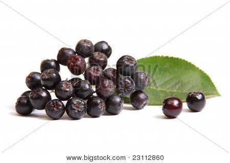 Black Ashberry
