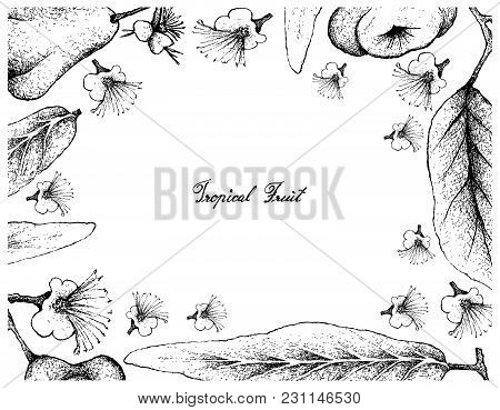 Tropical Fruits, Illustration Frame Of Hand Drawn Sketch Java Rose Apple And Watery Rose Apple, Bell