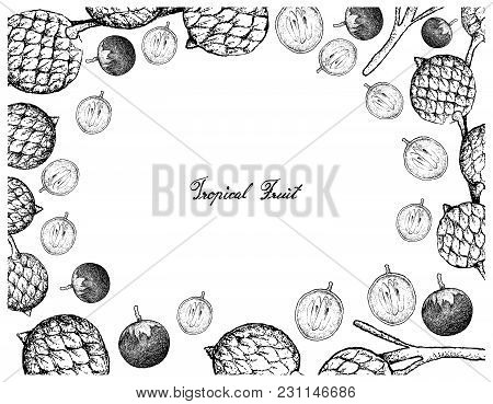Tropical Fruits, Illustration Frame Of Hand Drawn Bunch Of Sketch Star Apple Or Chrysophyllum Cainit
