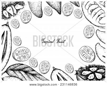 Tropical Fruits, Illustration Frame Of Hand Drawn Sketch Madan Or Garcinia Schomburgkiana Pierre And
