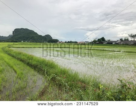 Flood In Rice Field And Mountain At Phatthalung Thailand
