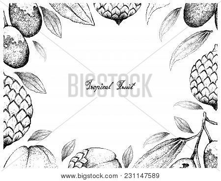 Tropical Fruits, Illustration Frame Of Hand Drawn Bunch Of Sketch Jujube, Chinese Date Or Ziziphus J