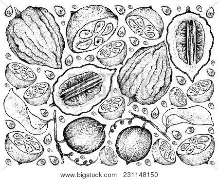 Tropical Fruits, Illustration Wall-paper Background Of Hand Drawn Sketch Monk Fruit, Luo Han Guo Or