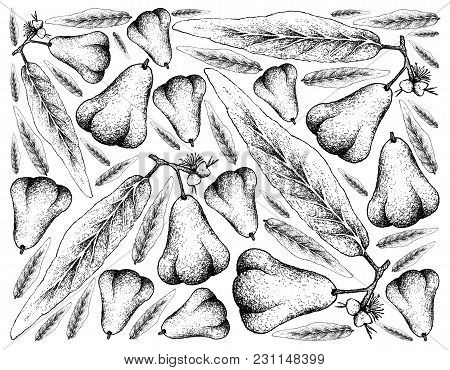 Tropical Fruits, Illustration Wall-paper Background Hand Drawn Sketch Of Java Rose Apple, Bell Fruit