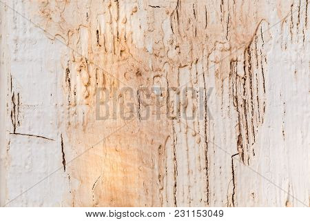 Close Up Shot Of An Old Natural Texture Wood Background With Old Paint Dripping.