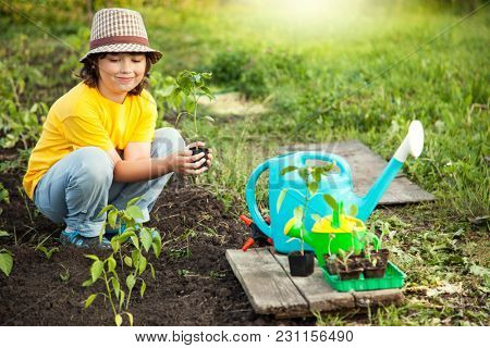 Boy in the garden admires the plant before planting. Green Sprout in Children Hands.